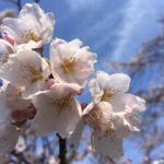 tvkテレビ神奈川のブログを更新しました