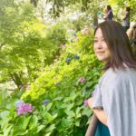 鎌倉・長谷寺の紫陽花